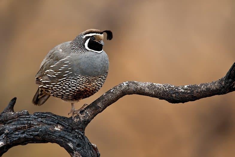 EATON CANYON BIRD