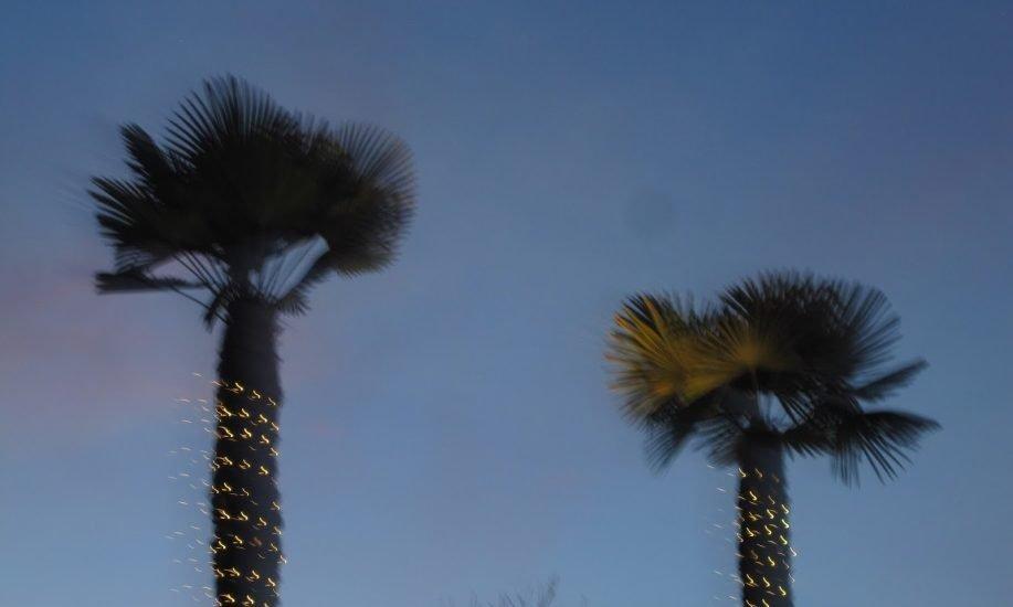 CHRISTMAS PALM TREES
