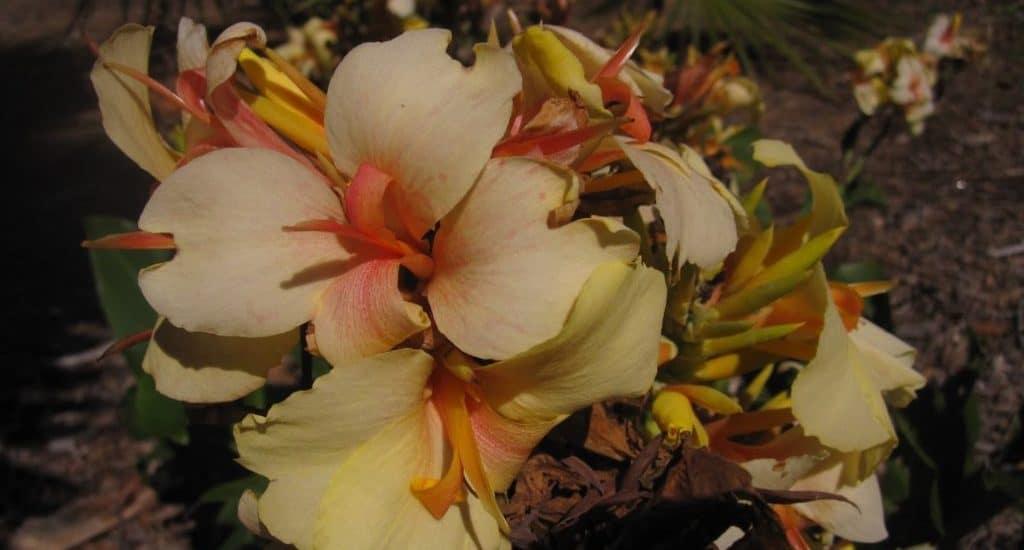 BALBOA PARK FLOWER
